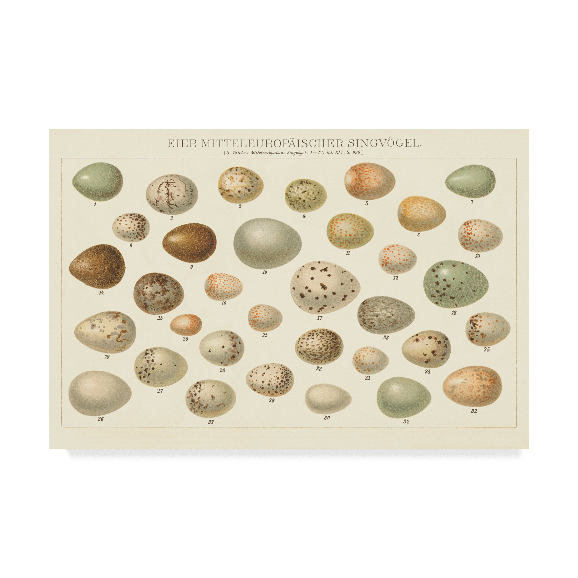 East Urban Home Song Bird Egg Chart V2 Graphic Art Print On Wrapped Canvas Wayfair