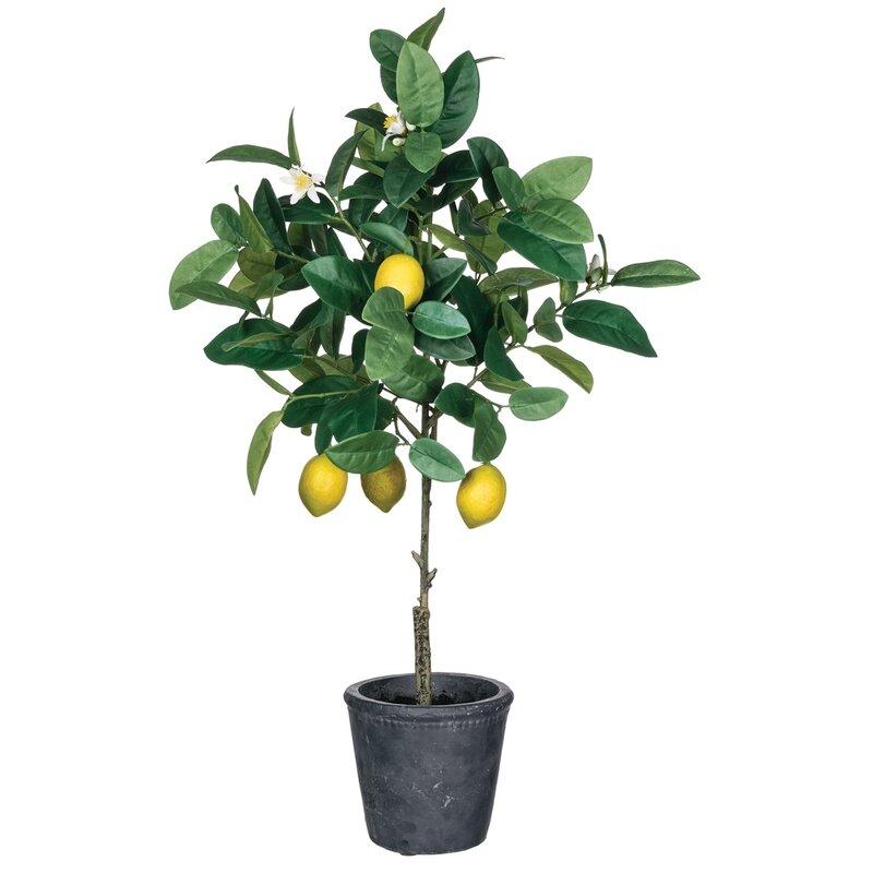august grove floor lemon tree in pot