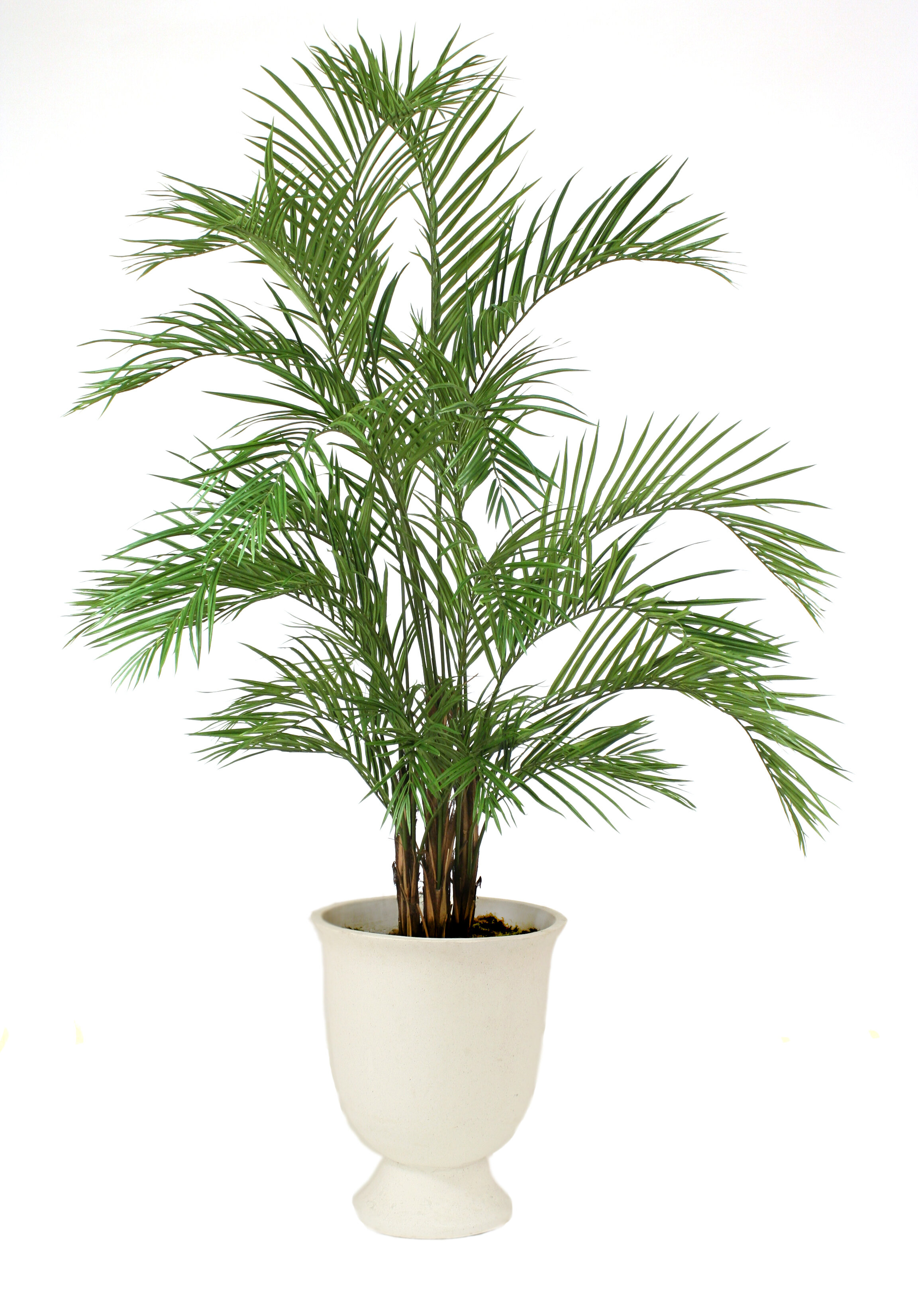 distinctive designs areca palm tree in planter wayfair