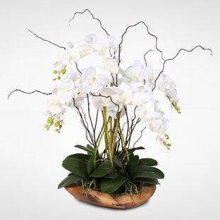 Phalaenopsis Silk Orchid Floral Arrangement
