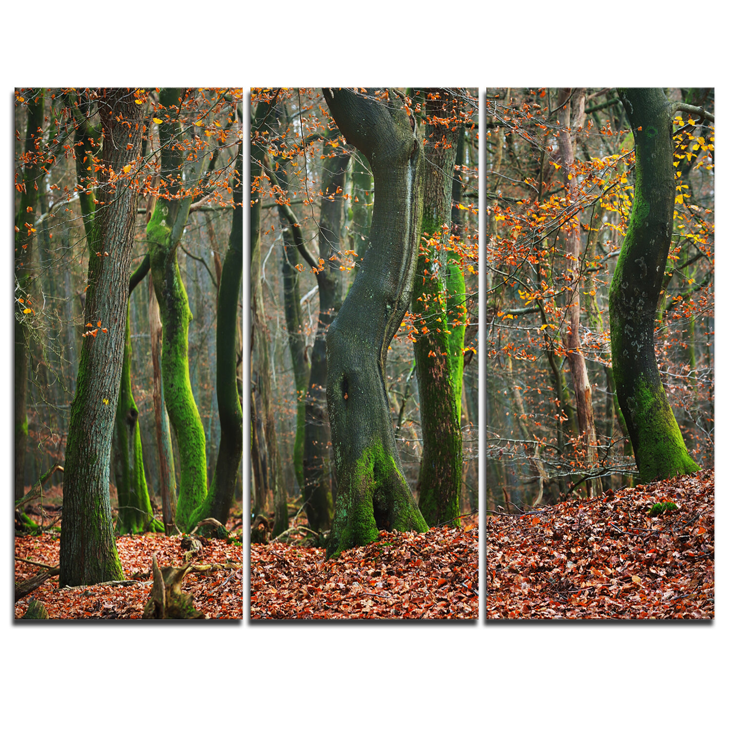 Designart Autumn Forest In The Netherlands 3 Piece Graphic Art On Wrapped Canvas Set Wayfair