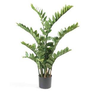 Floor Zamioculcas Plant In Pot By Sol 72 Outdoor
