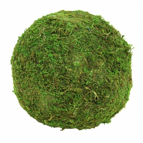 Decorative Moss Balls Delectable Koyal Wholesale Stacey Decorative Moss Ball Sculpture Reviews