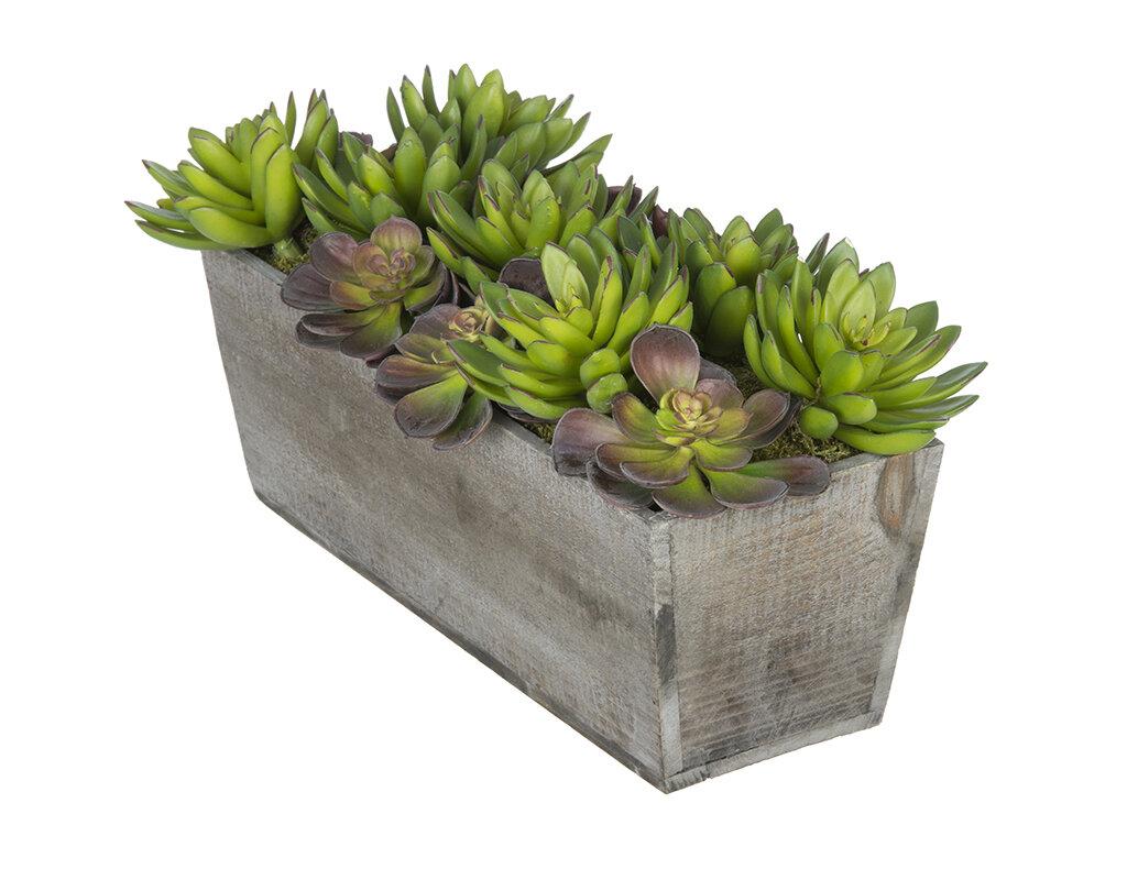 House Of Silk Flowers Artificial Succulent Garden Desk Top Plant In