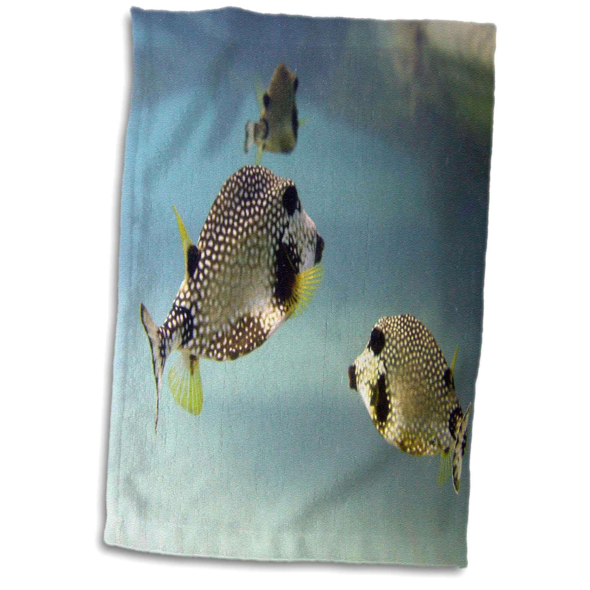 East Urban Home Murray Smooth Trunkfish Hand Tea Towel Wayfair