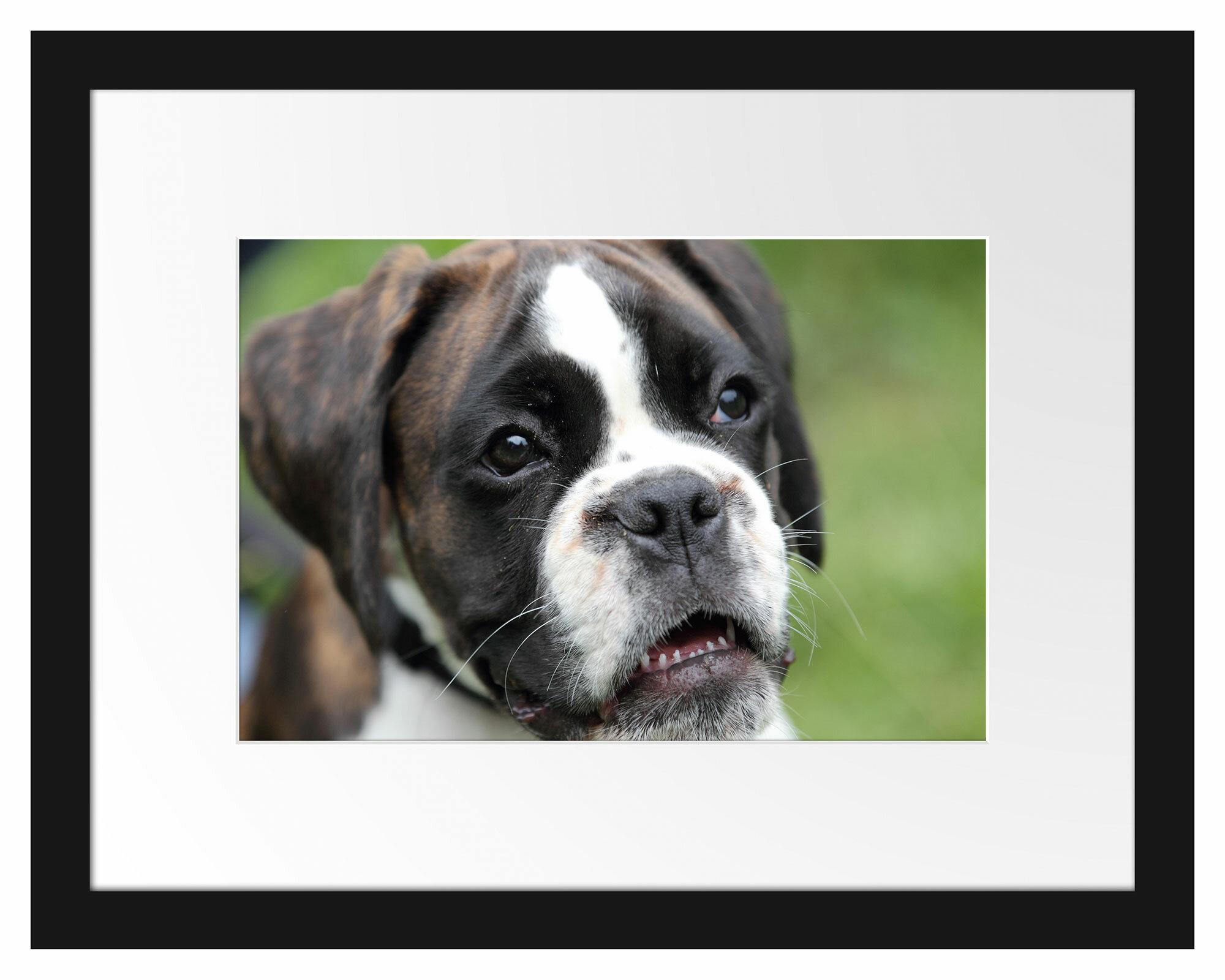 East Urban Home German Boxer Puppy Framed Art Print Poster Wayfair Co Uk