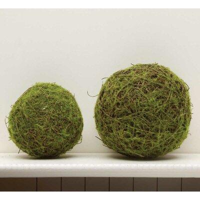Decorative Moss Balls Cool Gold Eagle USA Decorative Moss Ball Wayfair