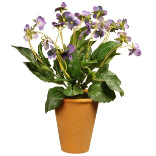 Wild Pansy Floral Floral Arrangement and Centerpieces in Pot