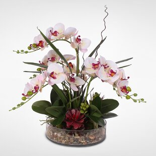 Silk Phalaenopsis Orchids Floral Arrangement in Glass Pot
