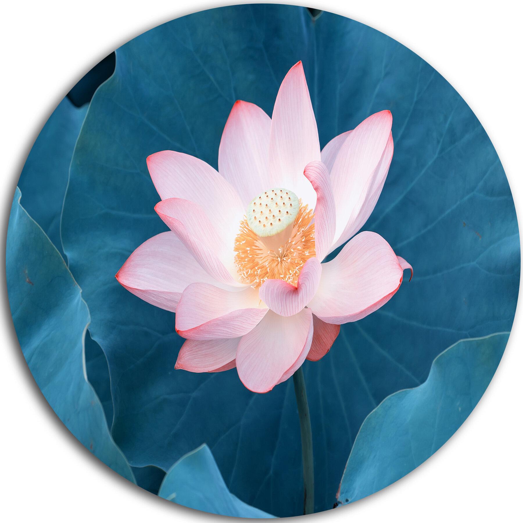 Designart Blooming Pink Lotus Flower Photographic Print On Metal