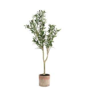 Olea Artificial Tree In Pot (Set Of 2) By Decostar