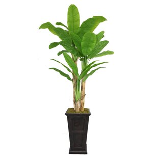 Tall Banana Leaf Tree in Planter