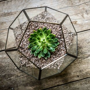 Review Glass Terrarium