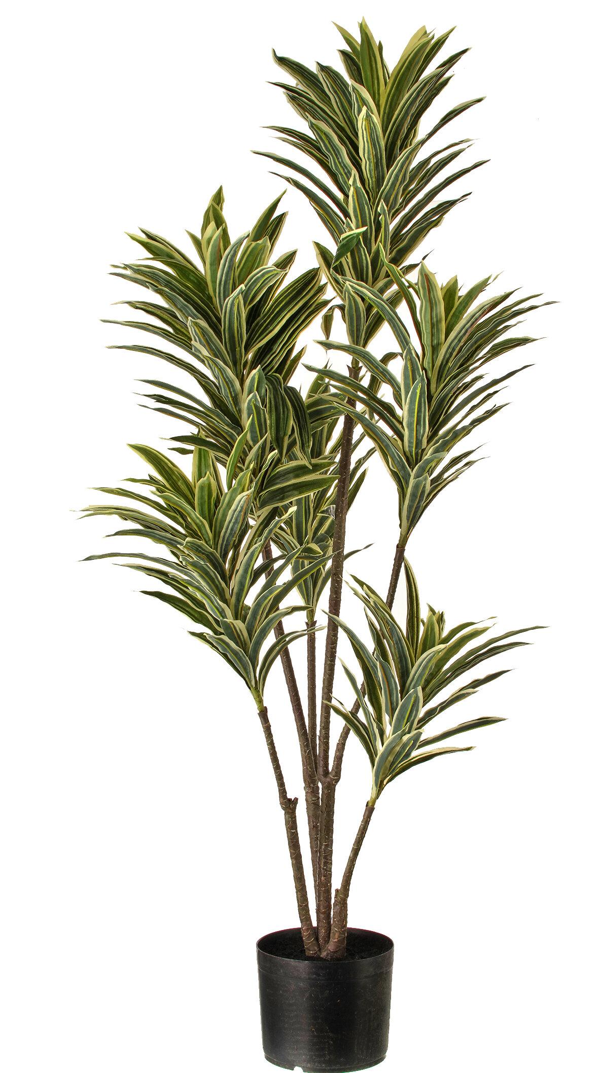 Ebern Designs 40 Artificial Dracaena Tree In Pot Wayfair