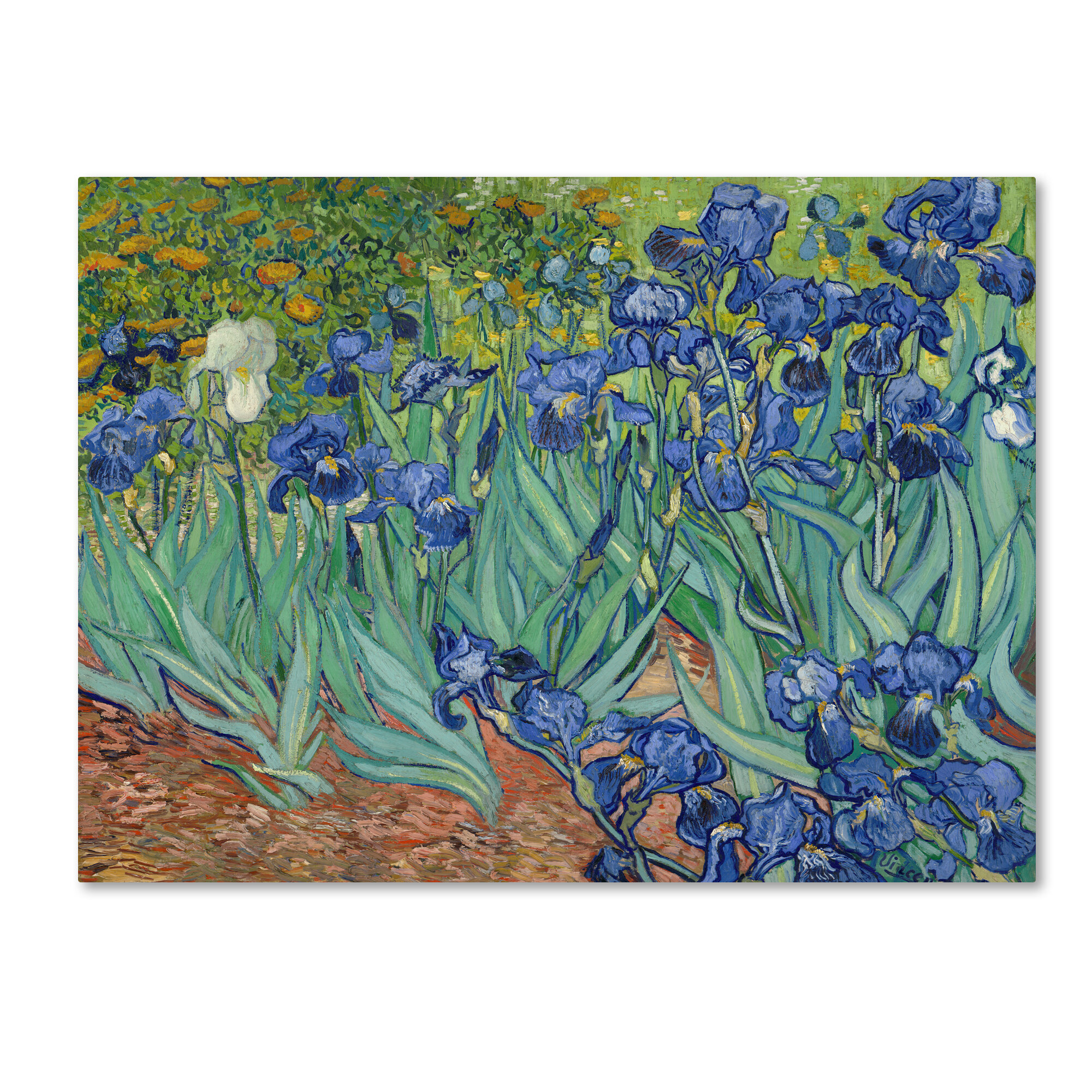 Van Gogh-Irises-Wedge Frame Picture On Canvas