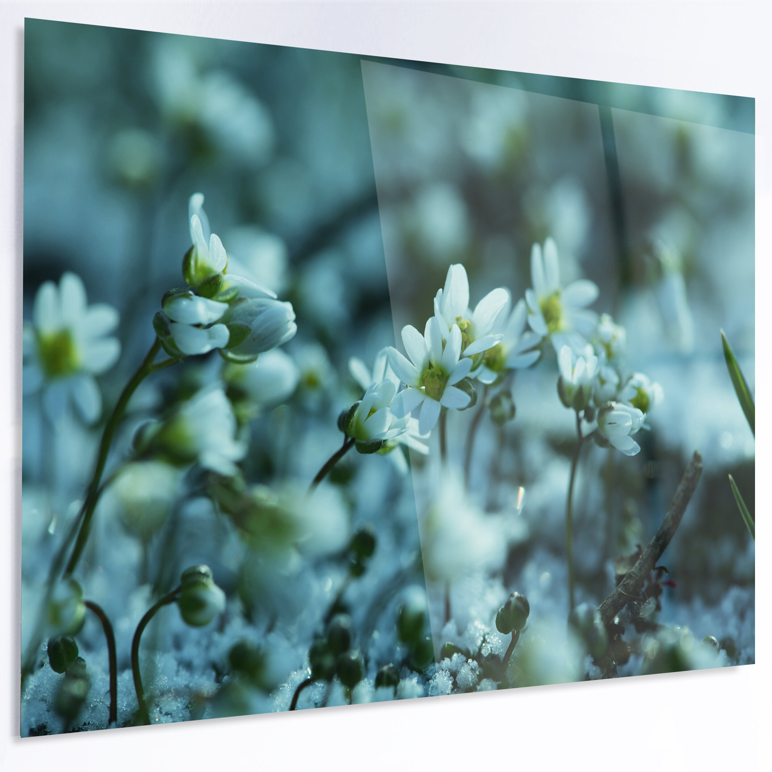 Designart Small White Flowers On Blue Background Photographic