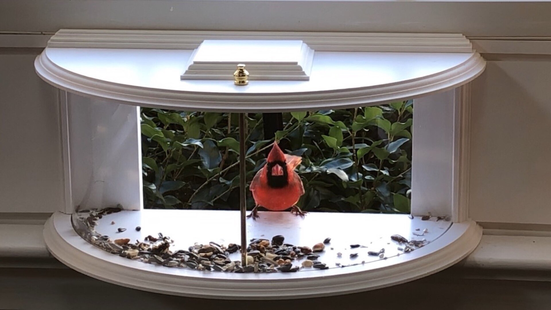 Arlmont Co Krick View Window Tray Bird Feeder Reviews Wayfair