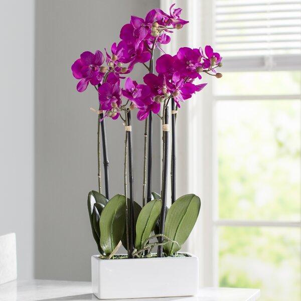 Wayfair & Artificial Orchid Flowers in Vase