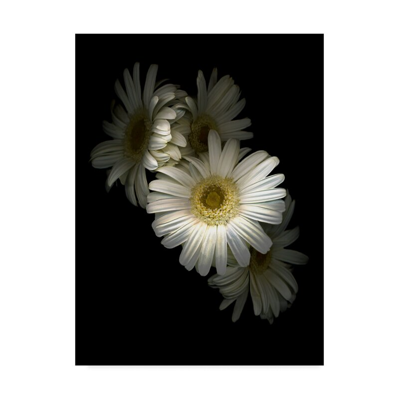Trademark Art White Gerbera Daisy By Graphic Art Print On Wrapped Canvas Wayfair
