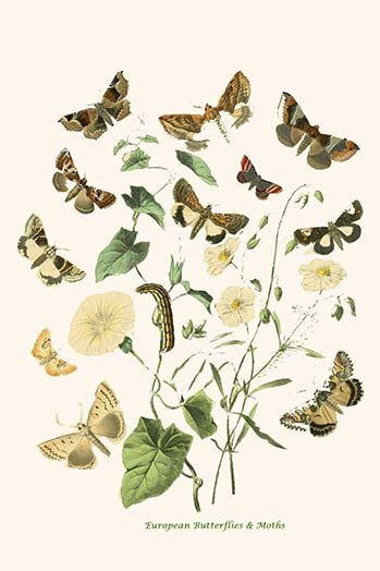 Buyenlarge European Butterflies And Moths By W F Kirby Graphic Art Print Wayfair