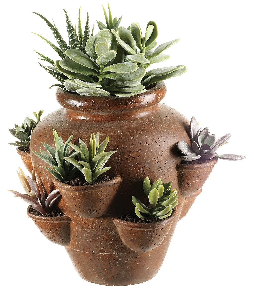 Tori Home Cactus Garden Desk Top Succulent Plant in Planter ...