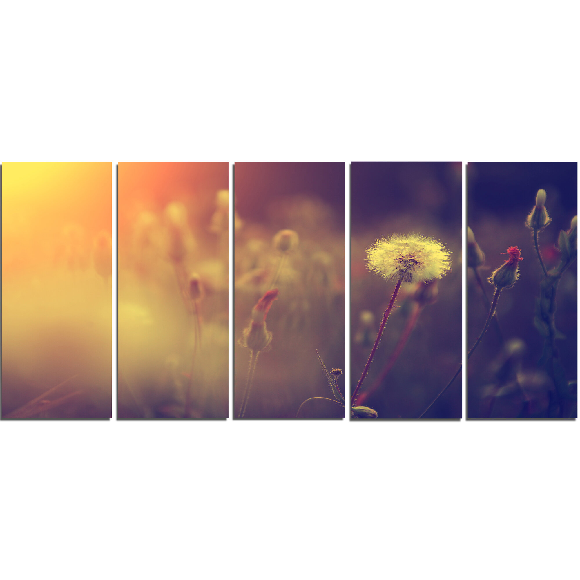 Designart Vintage Photo Of Dandelion Field 5 Piece Graphic Art On Wrapped Canvas Set Wayfair