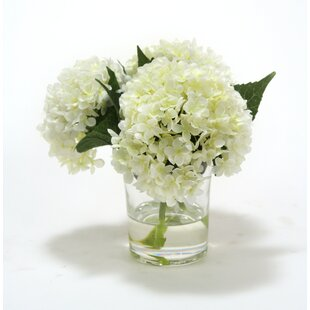 Waterlook White Hydrangeas in Glass Cylinder