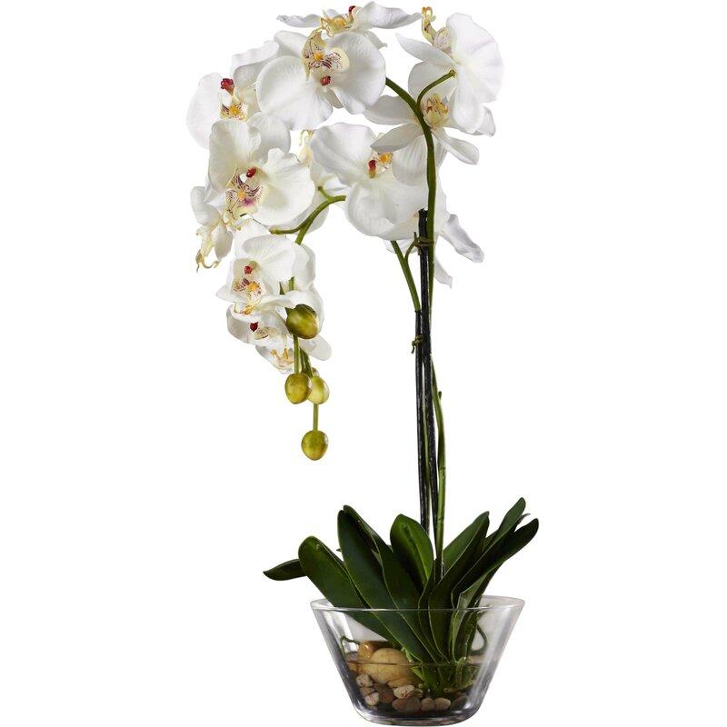 Phalaenopsis Silk White Orchid In Glass Vase Reviews Joss Main