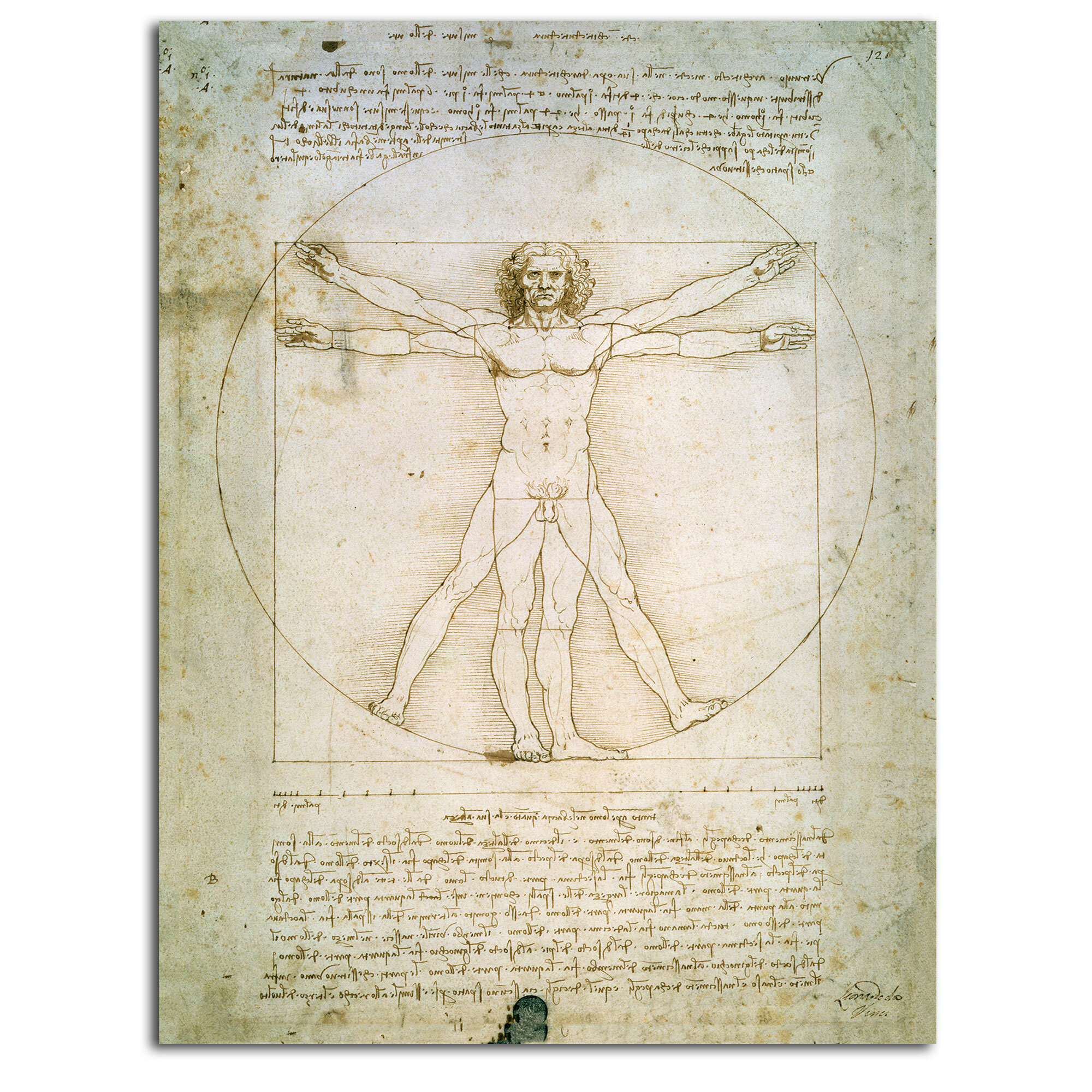Vault W Artwork The Proportions Of The Human Figure By Leonardo Da Vinci Painting Print On Rolled Wrapped Canvas Wayfair