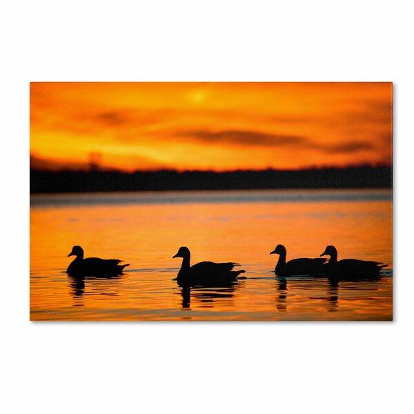 Trademark Art Jamaica Bay Sunset Nyc Ii By David Ayash Photographic Print On Wrapped Canvas Wayfair