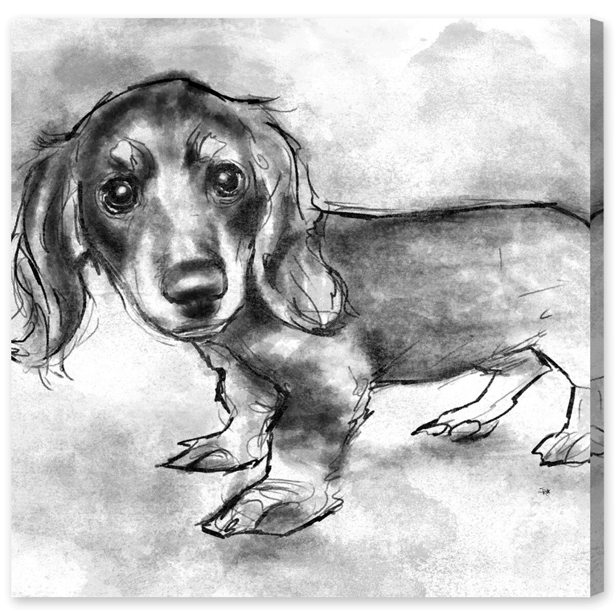 Art Remedy Dogs And Puppies Dachshund Puppy Drawing Print On Wrapped Canvas