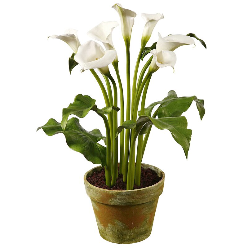 Jane Seymour Botanicals Calla Lily Floral Arrangement In Pot Wayfair