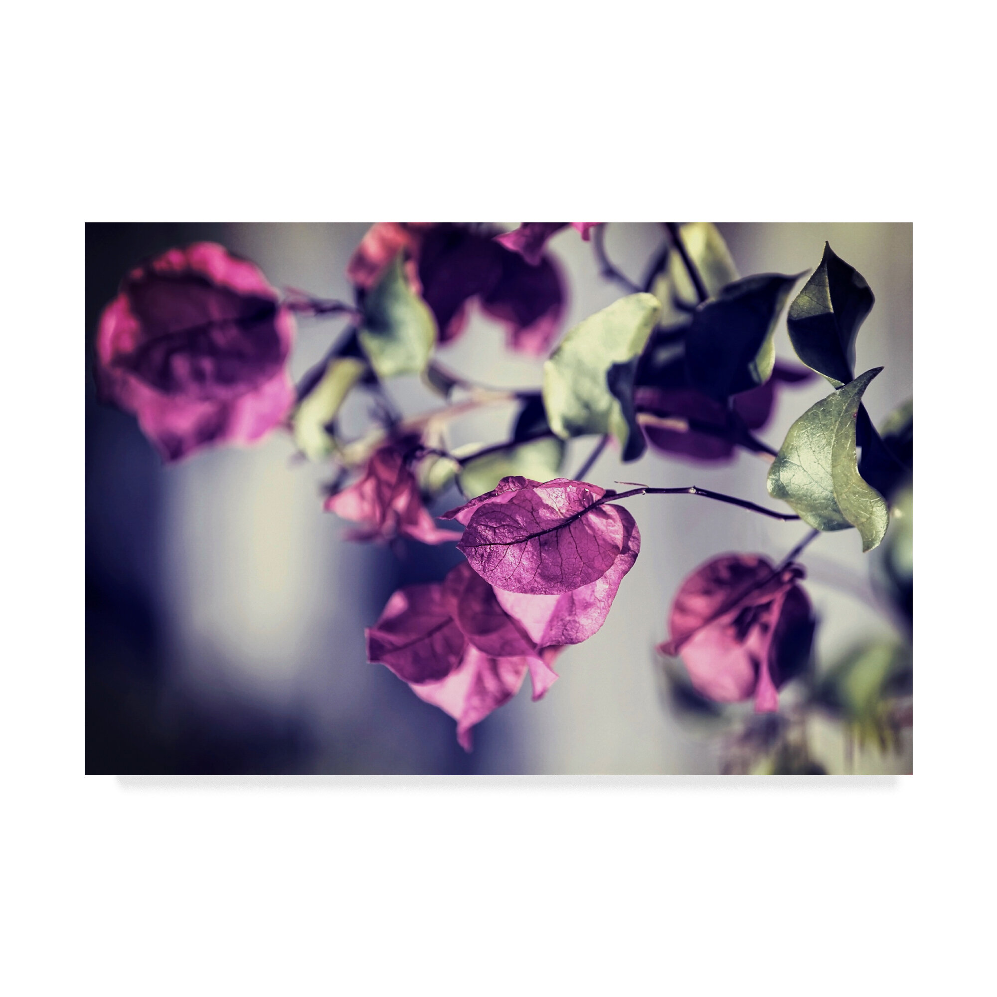 Ebern Designs Purple Macro Photographic Print On Wrapped Canvas &