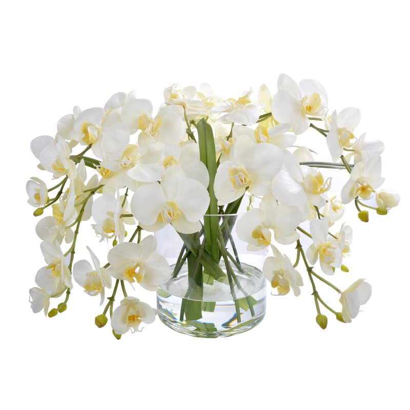 floral home decor orchid floral design wayfair.htm jane seymour botanicals phalaenopsis orchids floral centerpieces  jane seymour botanicals phalaenopsis