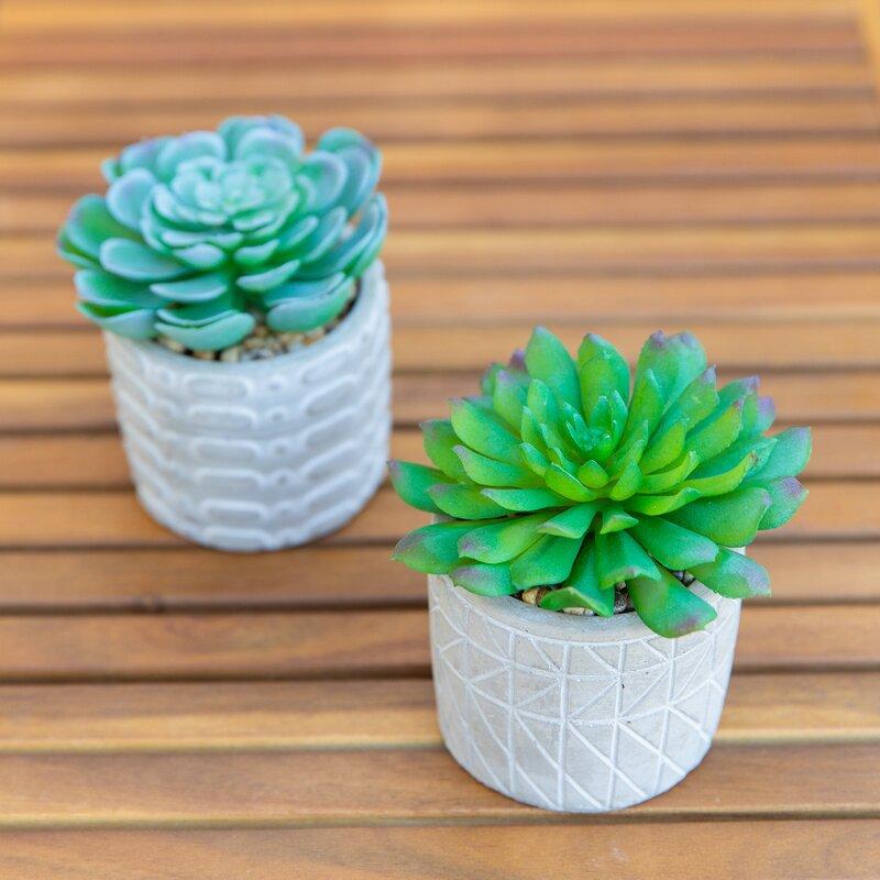 Primrue 2 Piece Succulent Plant In Pot Reviews Wayfair