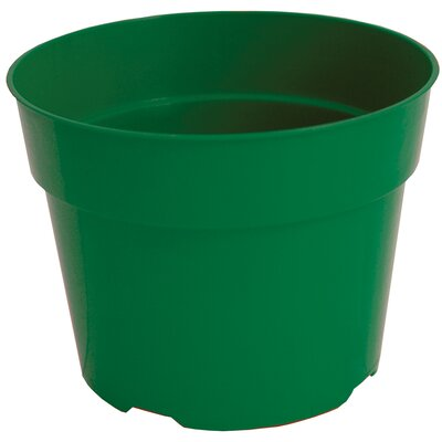 Terracotta Nursery Pot (Set of 36) Myers/Akro Mills Color: Green, Size: 3.5'' H x 4'' W x 4 D