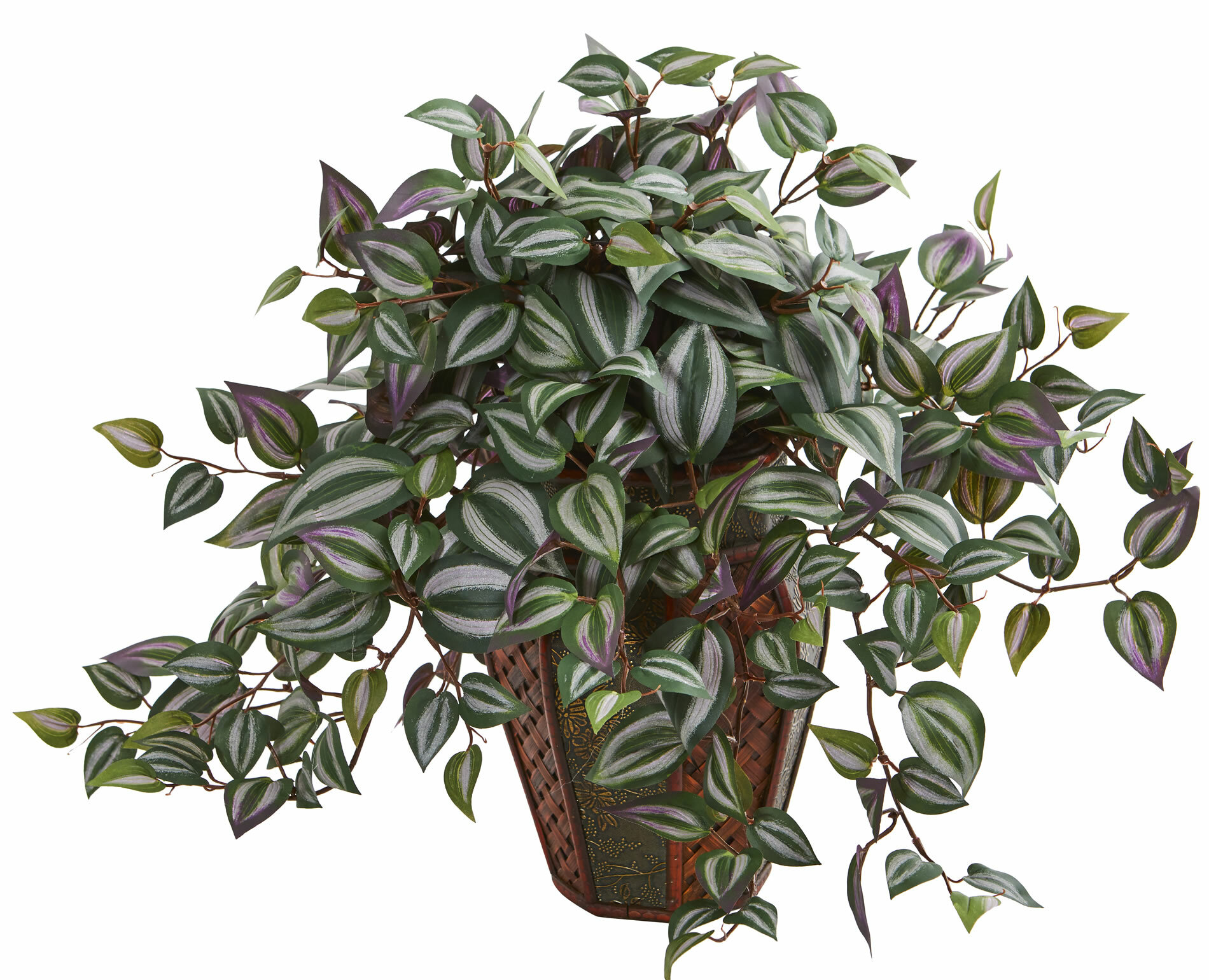 Charlton Home Wandering Jew Desktop Foliage Plant In Decorative