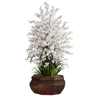 Large Dancing Lady Orchids Floral in Vase