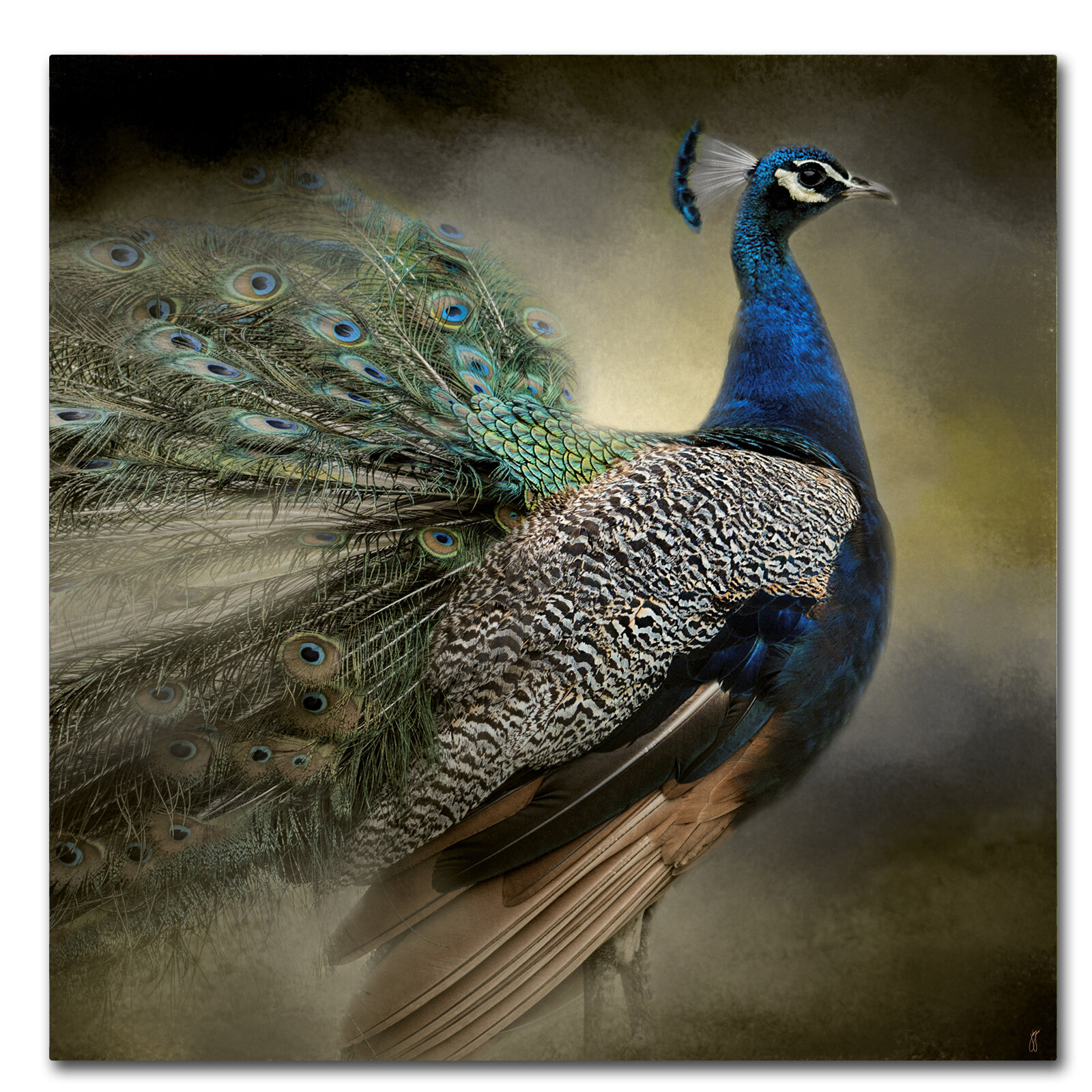 World Menagerie Peacock 5 Graphic Art Print On Wrapped Canvas Reviews Wayfair