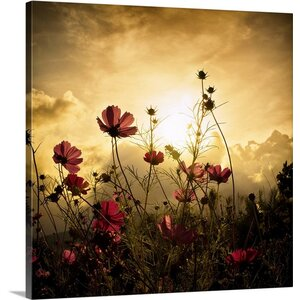 'Watching the Sun' Photographic Print on Canvas