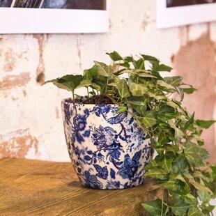 Sarandon Ceramic Plant Pot (Set Of 3) By Brambly Cottage