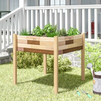 Enloe Cedar Raised Garden August Grove Size: 34 H x 36 W x 36 D