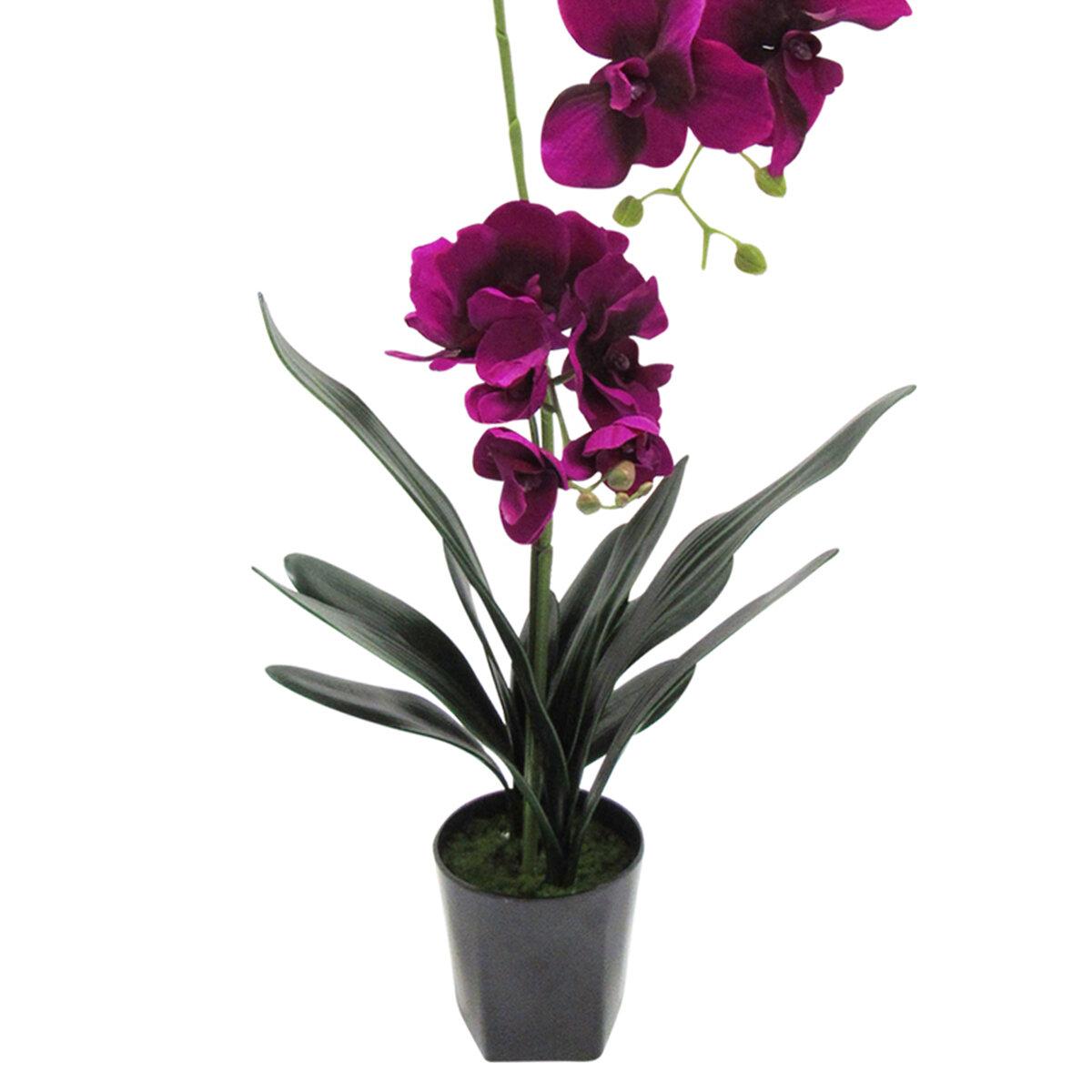 Deluxe Vanda Orchids Floral Arrangement In Pot Reviews Birch Lane