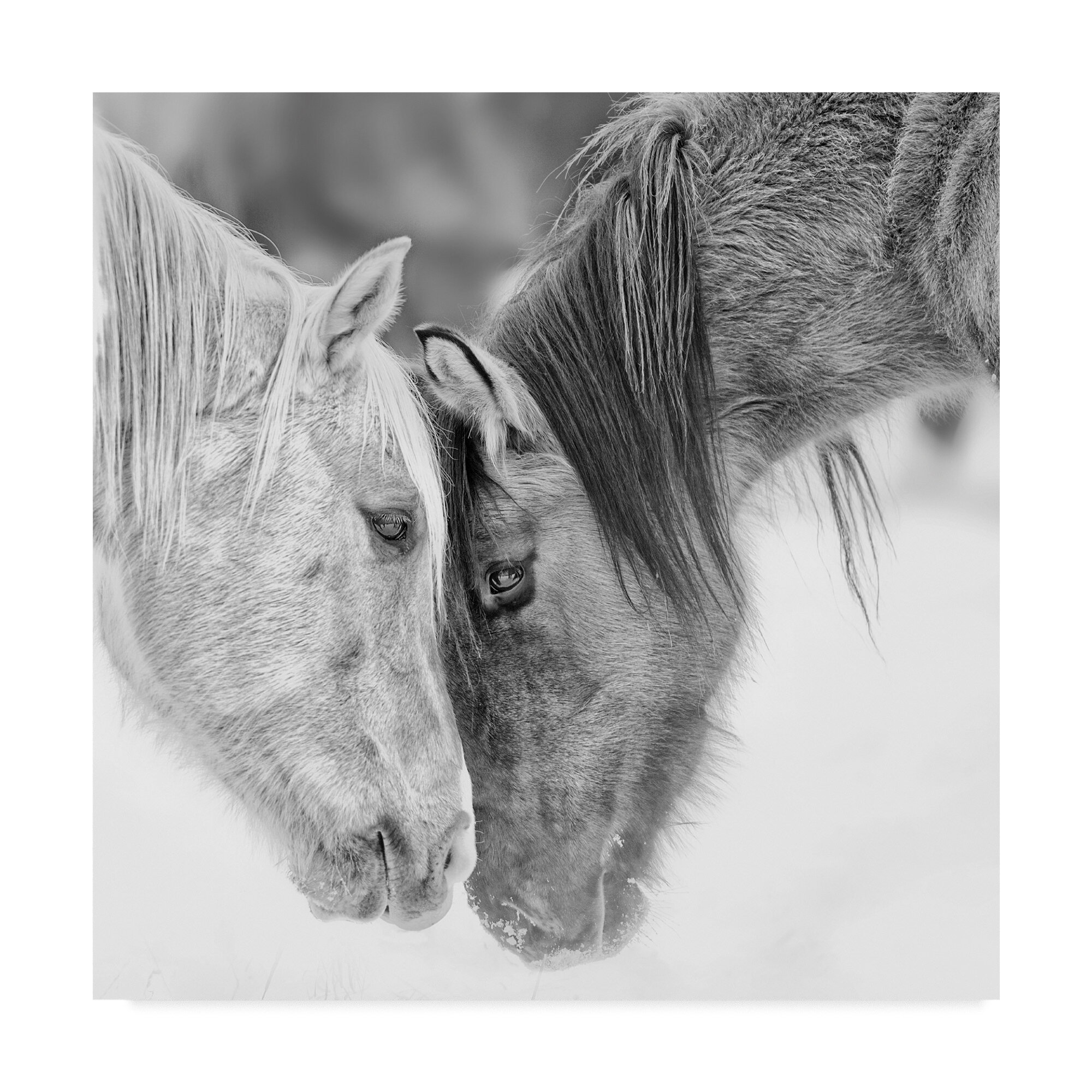 East Urban Home Black And White Horses Vii Photographic Print On Wrapped Canvas Reviews