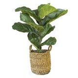 """36"""" Artificial Fiddle Leaf Fig Plant in Basket"""