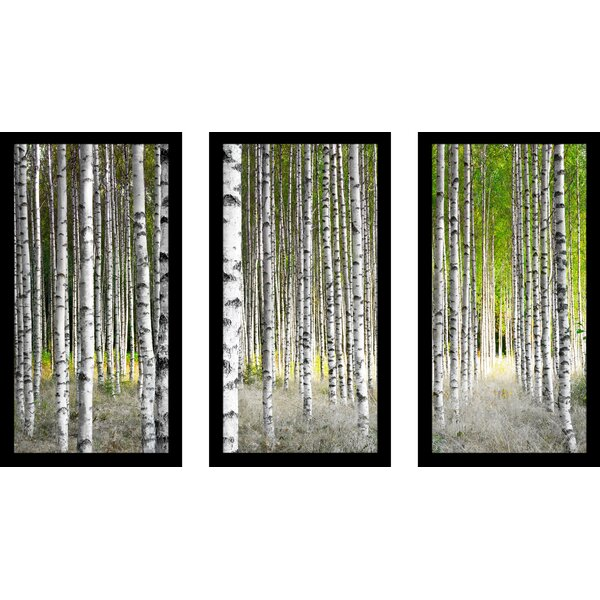 Pictureperfectinternational Birch Trees 1 3 Piece Framed Photographic Print Set Wayfair