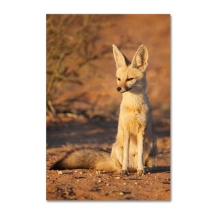 small animals photographic print on wrapped canvas - Small Animal Pictures To Print