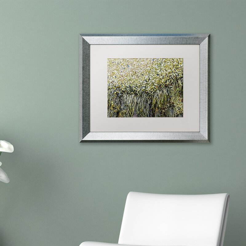Trademark Art Barnacles Framed Graphic Art On Canvas Wayfair