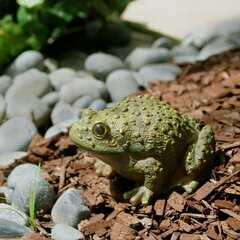 Cottage Country Frog Statues Sculptures You Ll Love In 2021 Wayfair