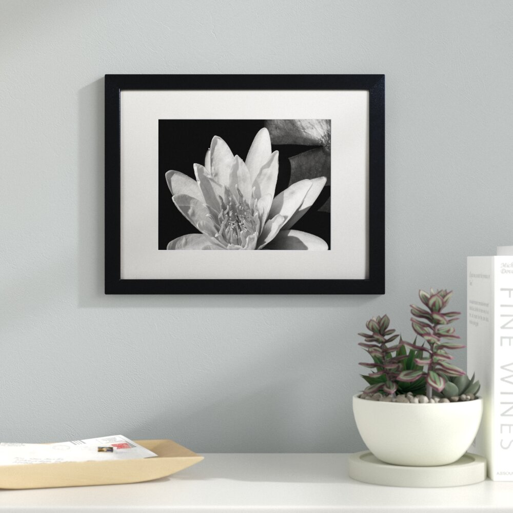 Latitude Run Water Lily In Black And White Framed Photographic Print Reviews Wayfair